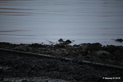 Can't see Turnstones Marchwood PDM 06-09-2016 20-27-47