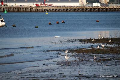 Egret & Seagulls Southampton PDM 22-07-2016 19-59-020