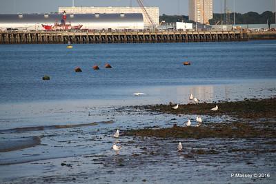 Egret & Seagulls Southampton PDM 22-07-2016 19-59-21