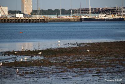 Egret & Seagulls Southampton PDM 22-07-2016 19-59-028