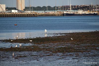 Egret & Seagulls Southampton PDM 22-07-2016 19-59-026