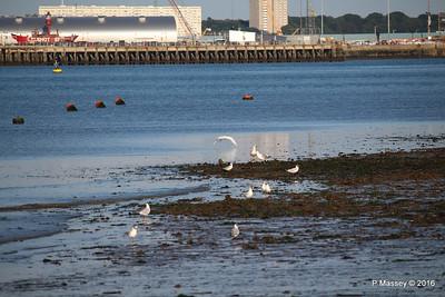 Egret & Seagulls Southampton PDM 22-07-2016 19-59-023