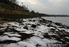 Sea Ice Marchwood 21-01-2017 14-36-045