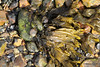 Snail Seaweed Marchwood PDM 23-04-2016 16-20-17