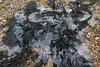 Frozen Seaweed Marchwood 21-01-2017 14-37-31