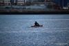 Kayaker Southampton Water PDM 27-04-2016 19-20-051