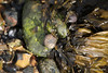 Snail Seaweed Marchwood PDM 23-04-2016 16-20-24