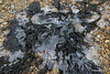 Frozen Seaweed Marchwood 21-01-2017 14-37-32