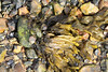 Snail Seaweed Marchwood PDM 23-04-2016 16-20-20