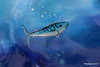2 Glitter Fish - The Brooks Shopping Centre - Ocean Village 16-08-2016 14-39-38