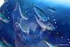2 Glitter Fish - The Brooks Shopping Centre - Ocean Village 16-08-2016 14-39-30