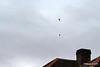 Raiders Royal Navy Parachute Display Team Southampton Boat Show PDM 17-09-2016 15-10-25