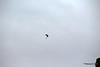 Raiders Royal Navy Parachute Display Team Southampton Boat Show PDM 17-09-2016 15-10-34