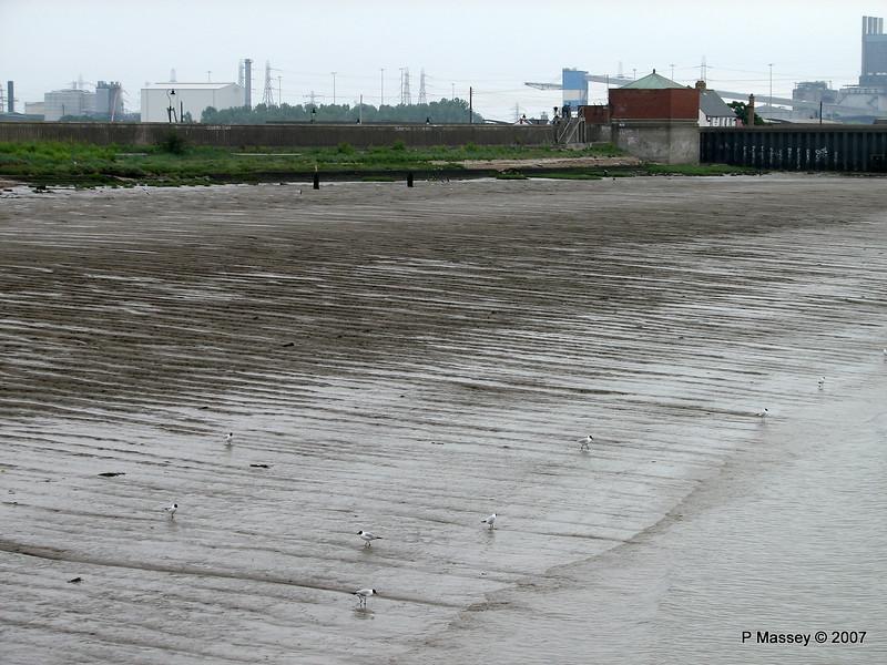 Tilbury Mud Seagulls PDM 11-06-2007 15-44-29