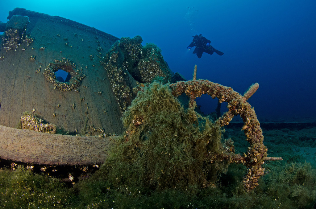 Diver checks out the wheel on Arabia...