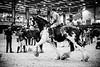Shire-Horse-Show-18-093