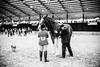 Shire-Horse-Show-18-486