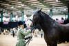 Shire-Horse-Show-18-459