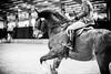 Shire-Horse-Show-18-502