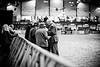 Shire-Horse-Show-18-488