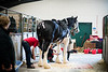 Shire-Horse-Show-18-362