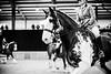 Shire-Horse-Show-18-495