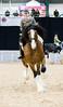 Shire-Horse-Show-18-500