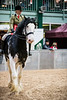 Shire-Horse-Show-18-324