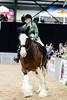 Shire-Horse-Show-18-497
