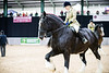 Shire-Horse-Show-18-493