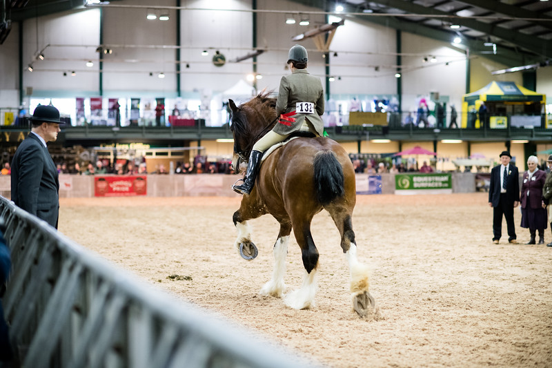 Shire-Horse-Show-18-504