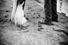 Shire-Horse-Show-18-344