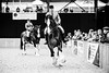 Shire-Horse-Show-18-494