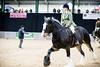 Shire-Horse-Show-18-498