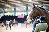 Shire-Horse-Show-18-487