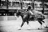 Shire-Horse-Show-18-178