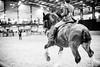 Shire-Horse-Show-18-503