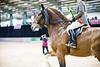 Shire-Horse-Show-18-501
