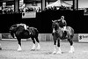 Shire-Horse-Show-18-489