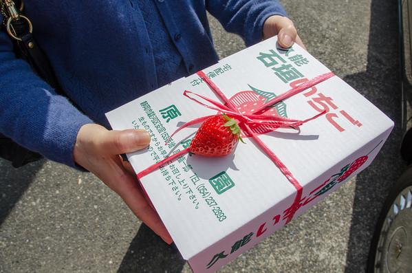 Shizuoka Strawberries, Japan
