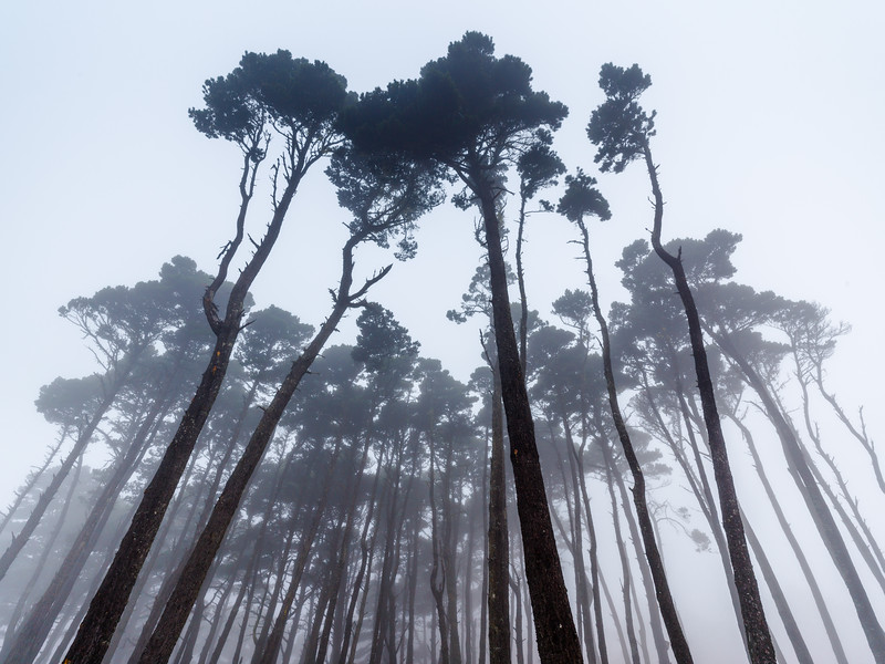 Sentinels in the Mist