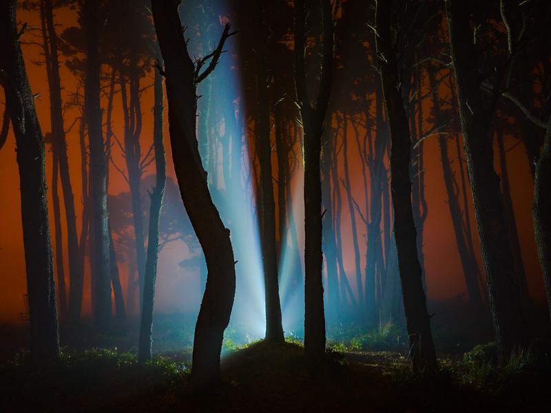 Eerie Woods