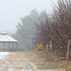 The ground was covered with a little snow at Sholan Farms and the air was filled with fog making it a dreary day on Wednesday, Jaunary 8,2019 in Leominster. SENTINEL & ENTERPRISE/JOHN LOVE