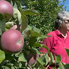 Joanne DiNardo, President of Sholan Farms, talked about the farm as she gave a tour on Tuesday afternoon, August 27, 2019. Here she talks about the Marshall McIntosh they have as she tries one during the tour. SENTINEL & ENTERPRISE/JOHN LOVE