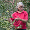 Joanne DiNardo, President of Sholan Farms, talked about the farm as she gave a tour on Tuesday afternoon, August 27, 2019. DiNardo talks about the Ginger Gold apples they have on the farm as she tries one. She said they where her favorite. SENTINEL & ENTERPRISE/JOHN LOVE