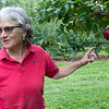 Joanne DiNardo, President of Sholan Farms, talked about the farm as she gave a tour on Tuesday afternoon, August 27, 2019.  DiNardo talks about the apple maggot fly trap they have on some of the trees to help with the bugs. SENTINEL & ENTERPRISE/JOHN LOVE