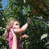 Bristol Candiello, 3, of Princeton recieves help from her father to grab an apple high in the tree on Sunday at Sholan Farms in Leominster.  Sentinet & Enterprise photo/Jeff Porter