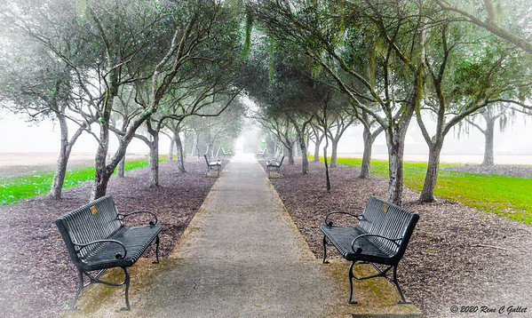 Olive Alley in the Fog