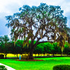 Century  Oak ---  ShoIom Park, Ocala FL