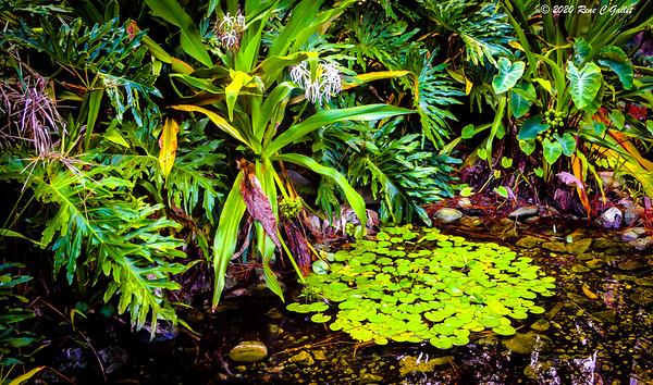 Tropical Pond